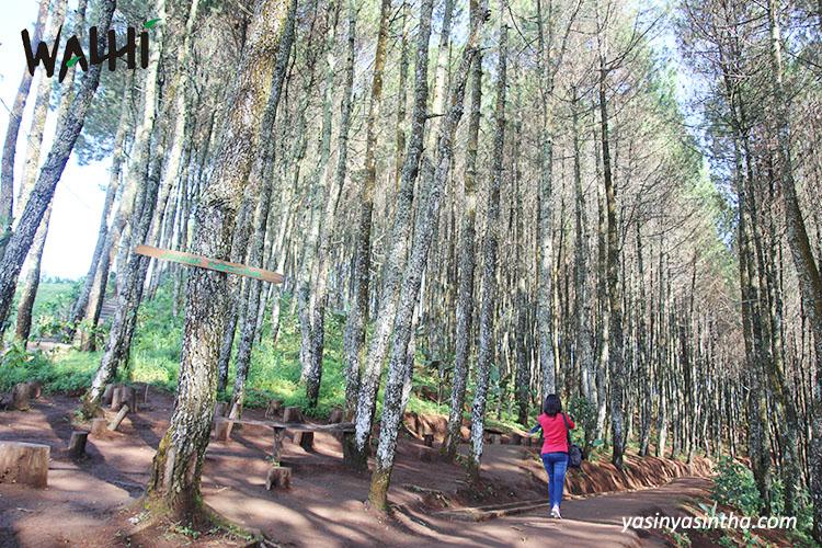 hutan - yasinyasintha